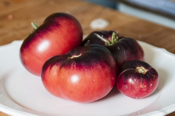 Amethyst Jewel (BIO-Tomatenpflanze)
