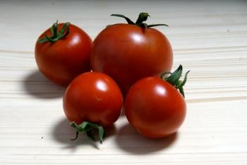 Tomate Bogus Fruchta - Pflanze (BIO)