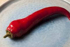 Paprika Antalya Dan - Pflanze (BIO), Schärfegrad 1