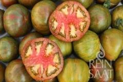 Cassio (BIO-Tomatenpflanze)