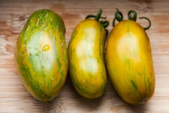 Green Sausage (BIO-Tomatenpflanze)