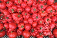 Tomate Marmande - Pflanze (BIO)