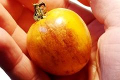 Tomate Pansy Ap - Pflanze (BIO)