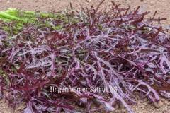 Asia-Salat Rouge Metis - Pflanze (BIO)