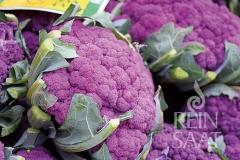 Blumenkohl Di Sicilia Violetta - Pflanze (BIO)