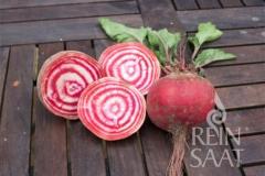 Rote Bete, Ringelbete Tonda di Chioggia - Pflanze (BIO)